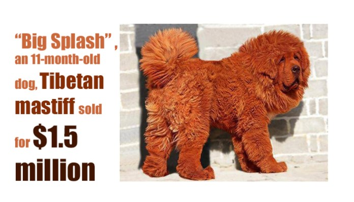 $1.5 million Most Expensive Dog