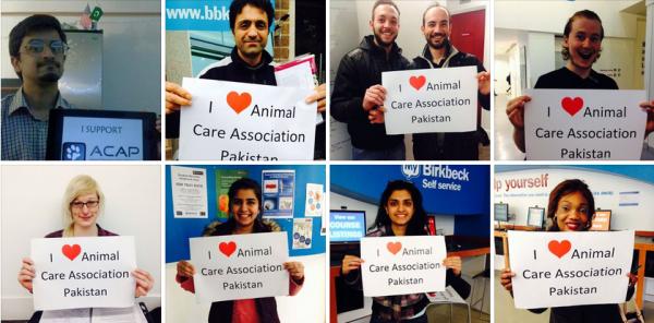 Animal Care Association Pakistan: