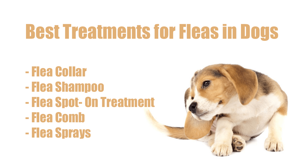 Best Treatment For Fleas On Cats And Dogs