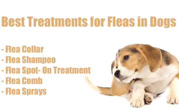Best Treatments for Fleas in Dogs
