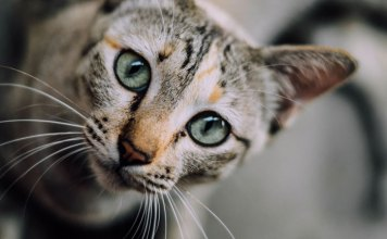 Caring for Kittens: Tips for Raising Young Felines