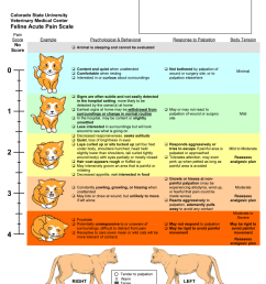 pain scale for felines to get a larger file right click on the image choose open photo in new tab and then download it from there  [ 917 x 1200 Pixel ]