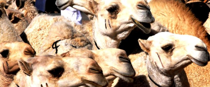El coronavirus MERS traspasa las fronteras de Oriente Medio