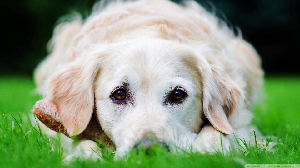 Educar Y Esterilizar Es Clave Para Ayudar A Los Animales