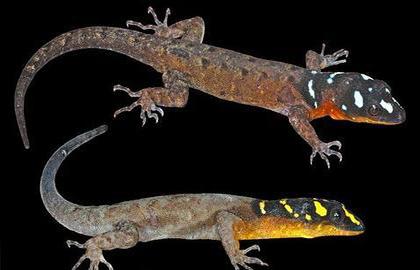 Descubren Nuevas Especies De Animales Y Plantas En La Amazonia
