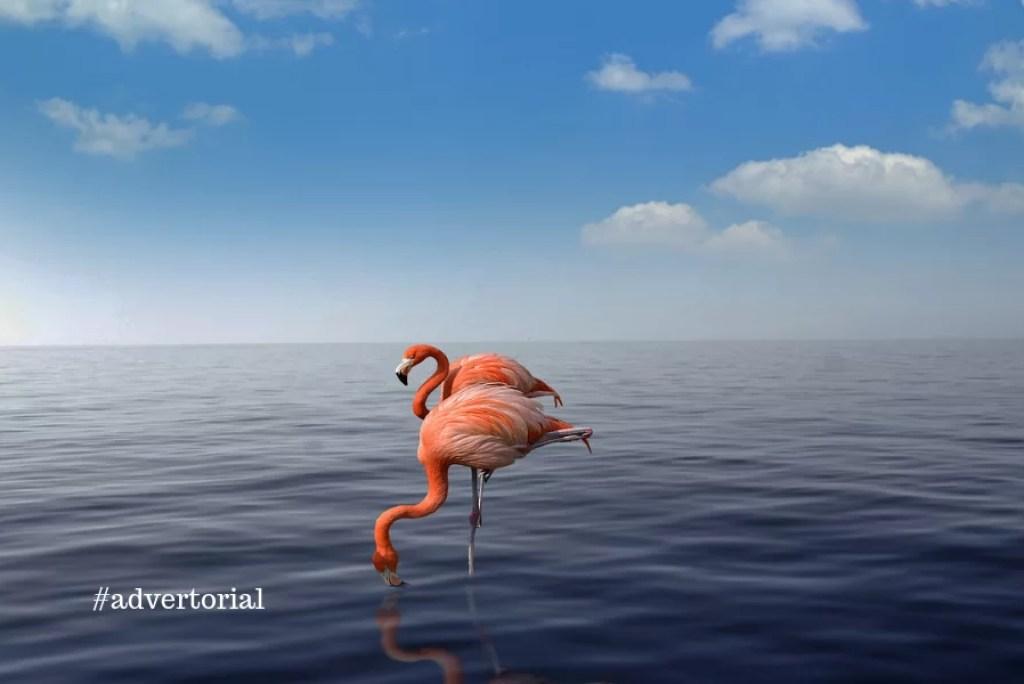 Aruba: zoveel meer dan enkel zee en strand