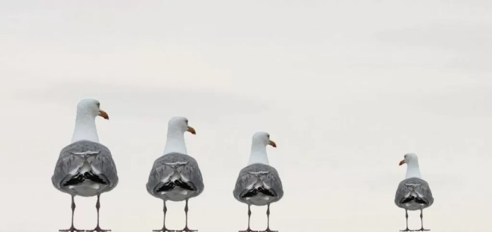 gulls 2662550 1920