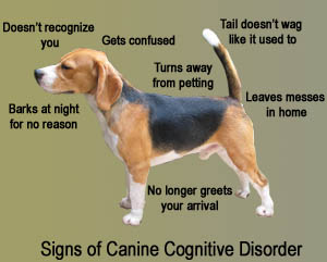 Signs of canine cognitive disorder.