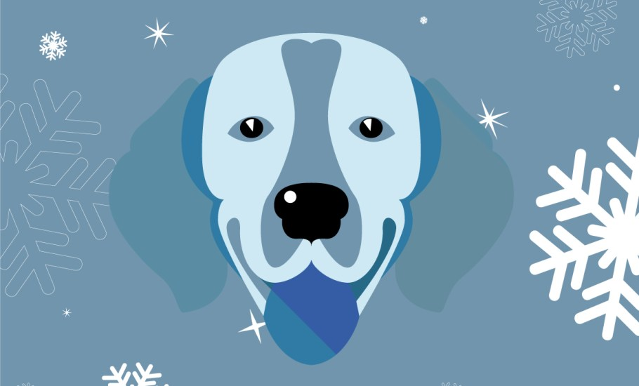 Stressful Situations for Dogs at Christmas - Infographic By VetPlus