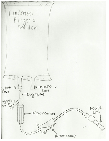 diagram of where kidneys are common wiring diagrams subcutaneous fluids for cats - vetrxdirect blogvetrxdirect blog