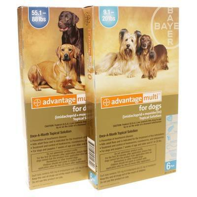 You are viewing: Home Dog Dog Medications Advantage Multi for Dogs