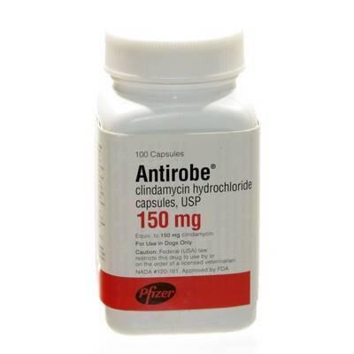 Antirobe: Clindamycin for pets - Antibiotic - VetRxDirect.com