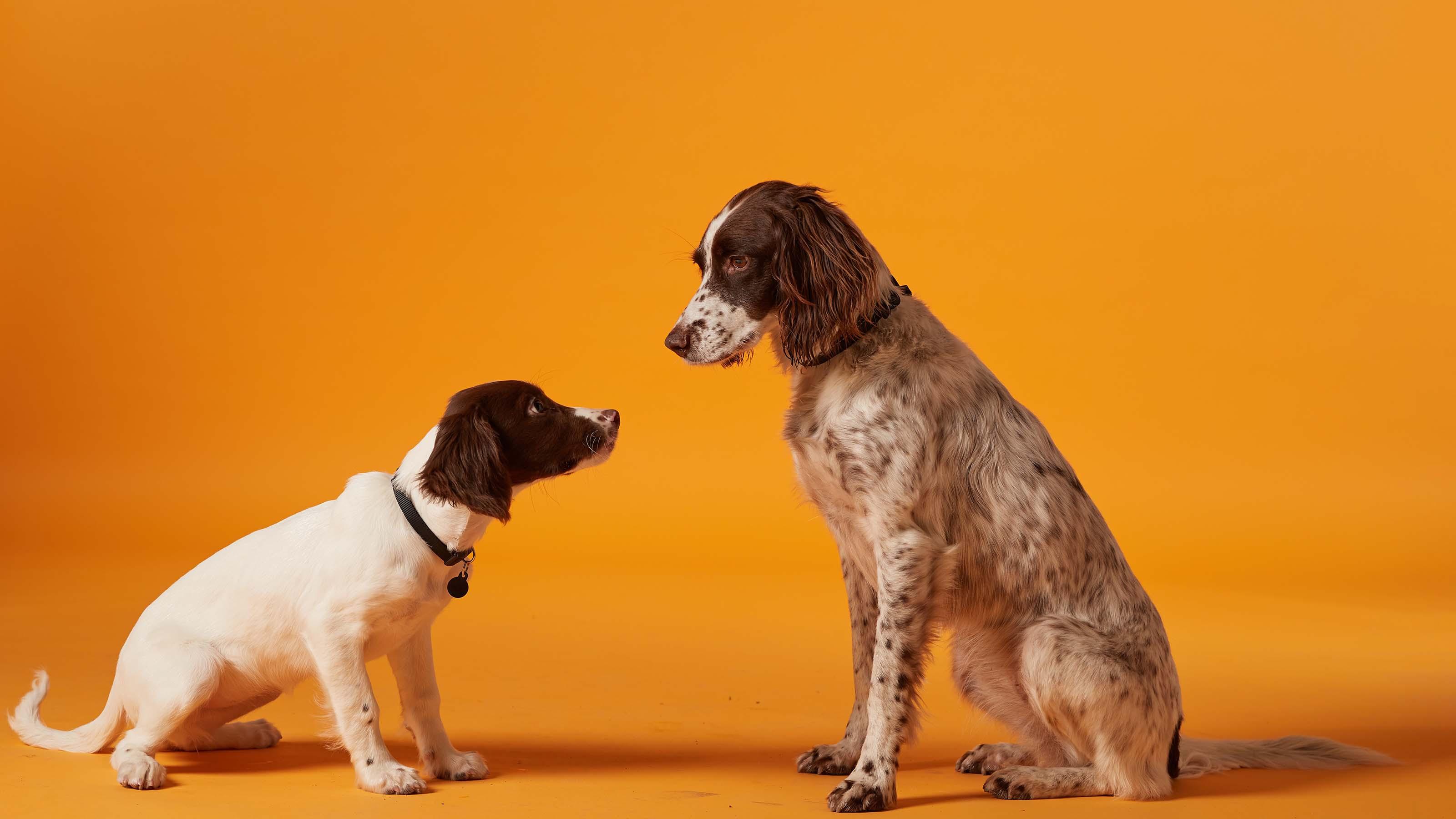 vac4life pet health plans