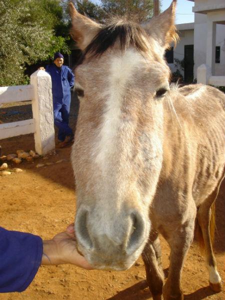 Endocrine Hyperparathyroidism In Horses Vetlexicon