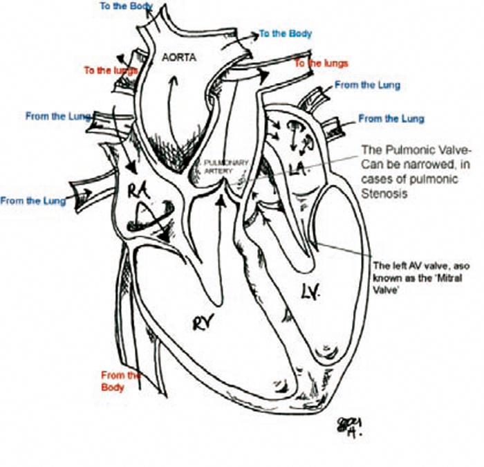 Canine cardiology: conditions, causes, advances and care