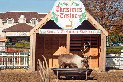 The Rising Star Casino is home to its annual reindeer display.