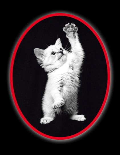 Kitty shirt-001 (3)