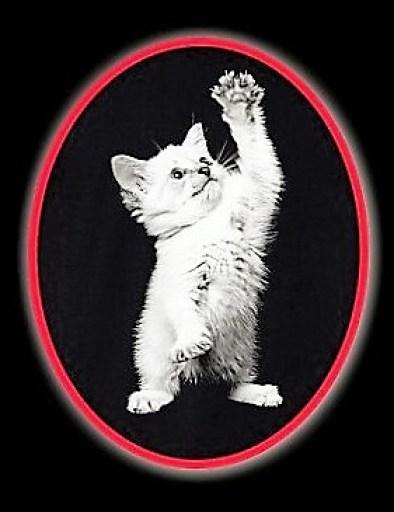 oval kitty 1 - Copy