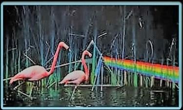 Pink Floyd ~ Sorrow