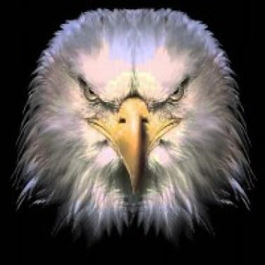 disturbed-eagle