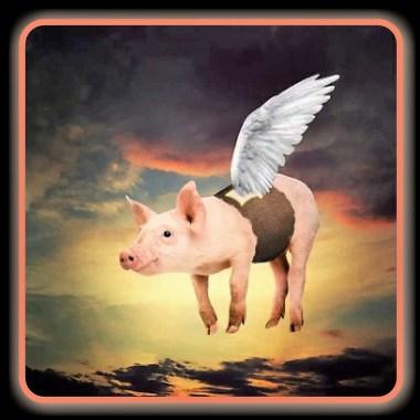 pig wing proj-001