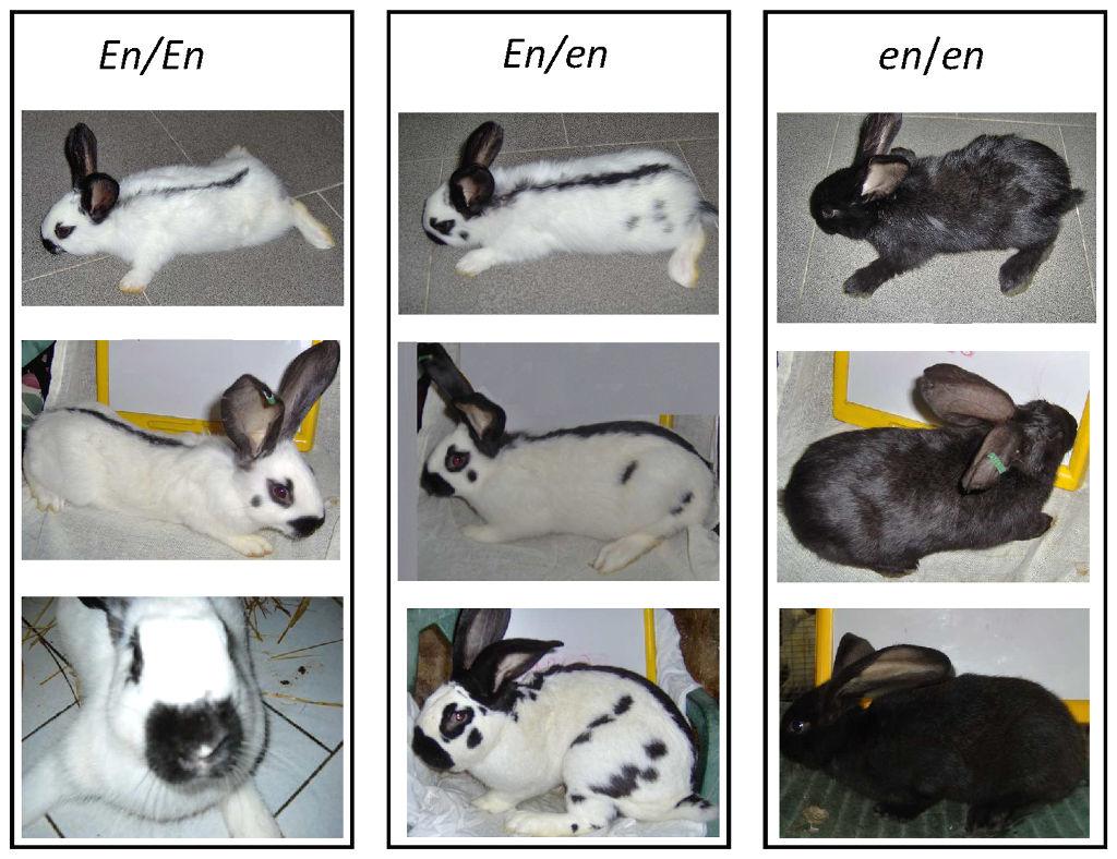 Megacolon  Rabbits mishmash storage page  The curse of