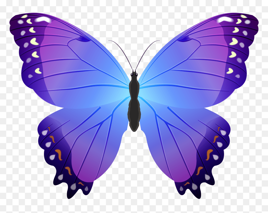 Small Butterfly Clipart Hd Png Download Vhv