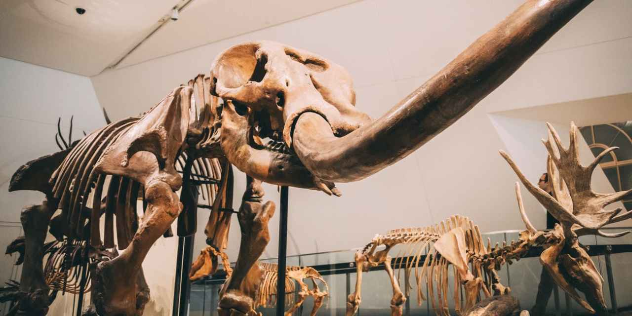 Why Museums Need to Digitize Fossils to Understand Past Mysteries