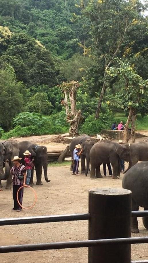 タイ チェンマイ メーサー・エレファント・キャンプ