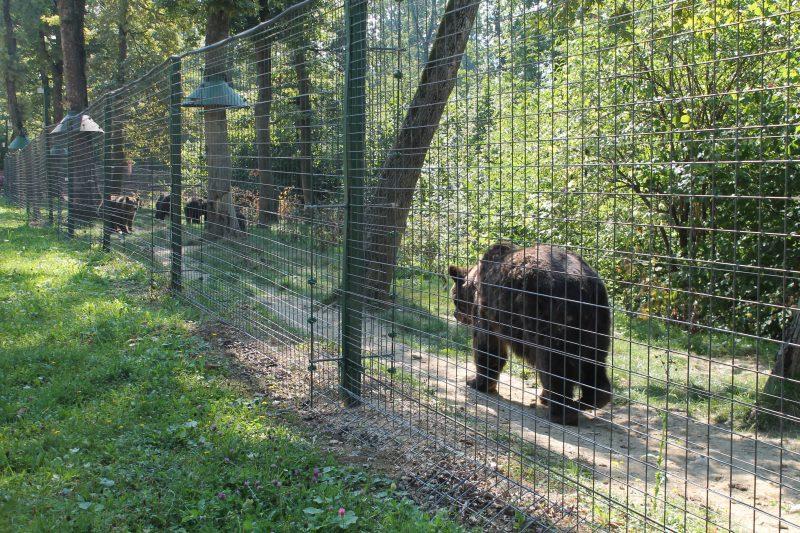Libearty Bear Sanctuary Zarnesti (Santuário de Ursos, na Romênia)