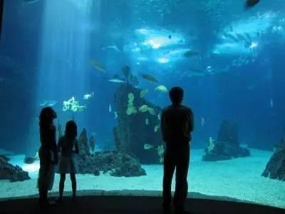 A Lisbona visita acquario più bello d'Europa