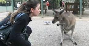 La Sydney di Angelica: consigli per trasferirsi