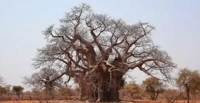 Zimbabwe e il suo clima, ecco quando andare