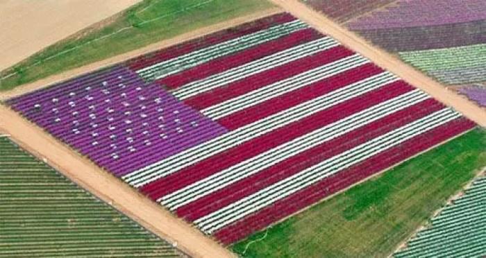 california-fiori-bandiera