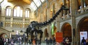 Tutti i musei gratis di Londra, scelti per te