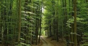 Foresta Nera in Germania