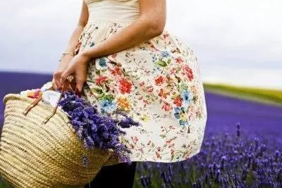 lavanda fioritura