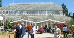 Orticoltura, fiori e primavera a Firenze