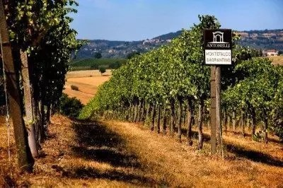 sagrantino-montefalco-cantina-antonelli-sanmarco-3