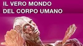 """Body Worlds a Bologna: la mostra del """"Dott. morte"""""""