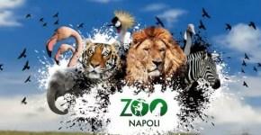 Carnevale a Napoli, gli eventi del 2014