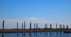 Isole in Rete 2014, alla scoperta della Laguna di Venezia