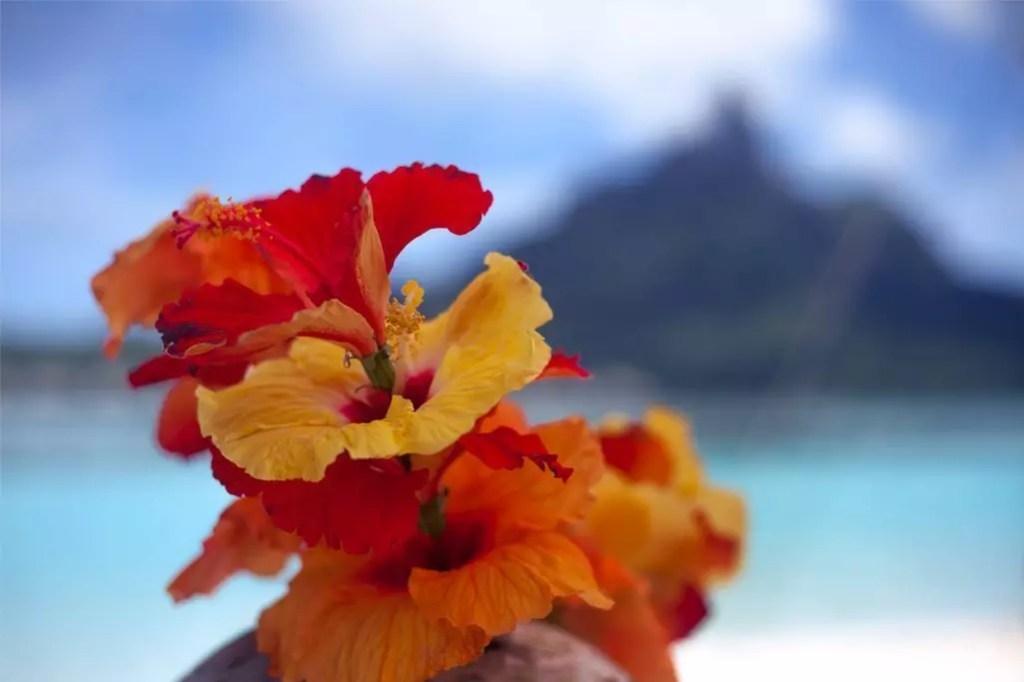 polinesia-fiori