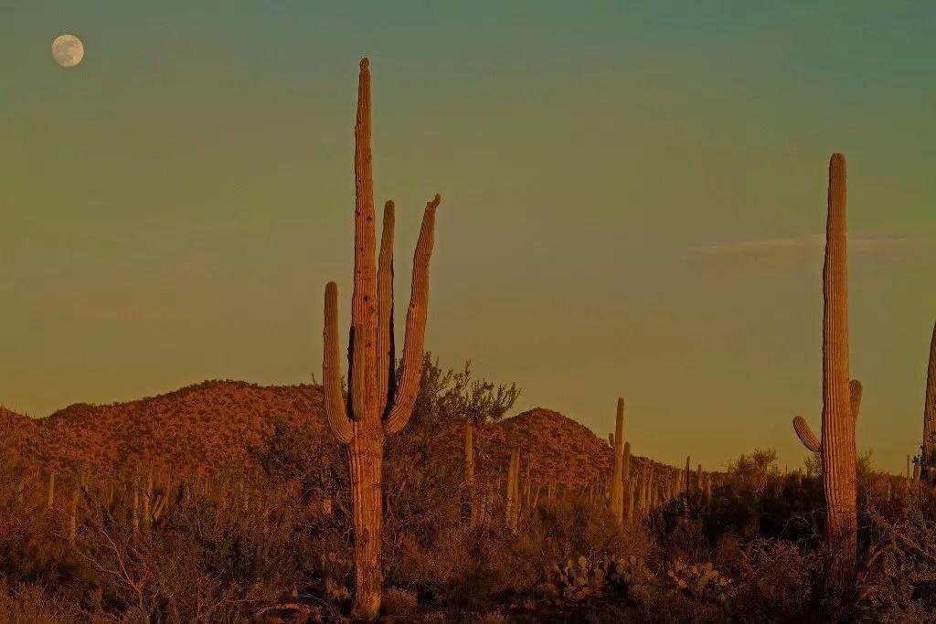 arizona-saguro-parco-tramonto