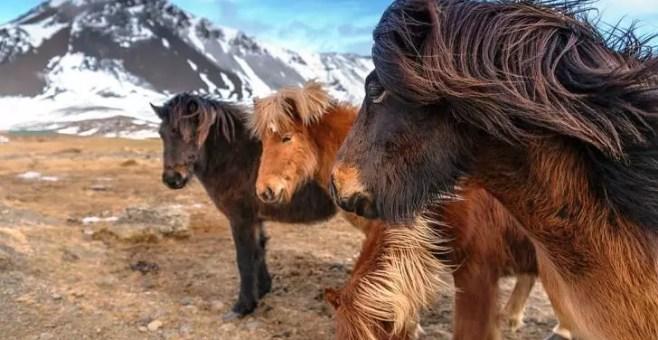 Islanda in inverno, 7 attività low cost da non perdere