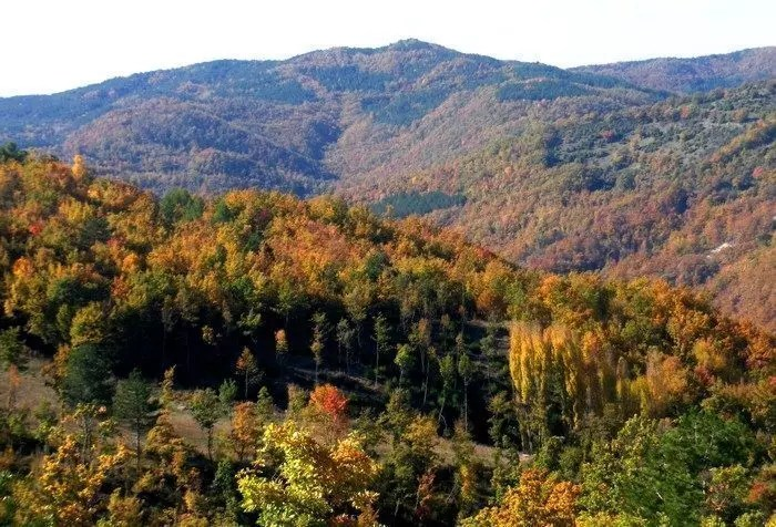 pietralunga-foliage