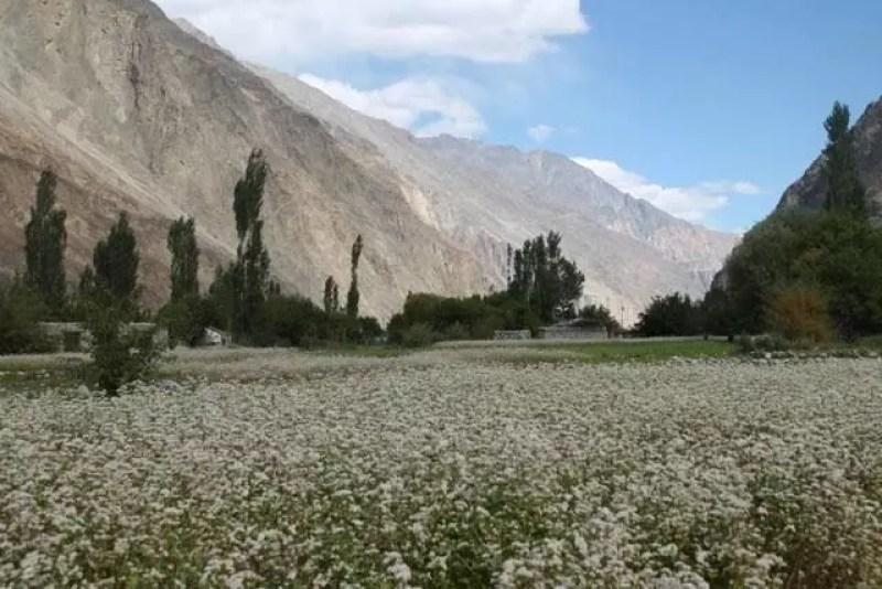 Ladakh17