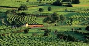 I migliori vini della Slovenia, tour nelle aziende vinicole