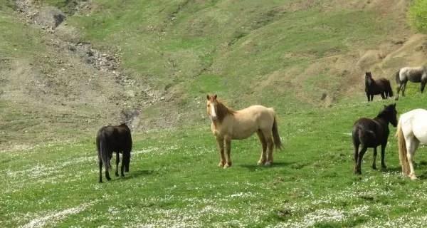 Sicilia low cost tra Nebrodi, Etna e Montalbano Elicona