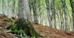 All'ombra dei giganti: Monte San Vicino e Monte Canfaito